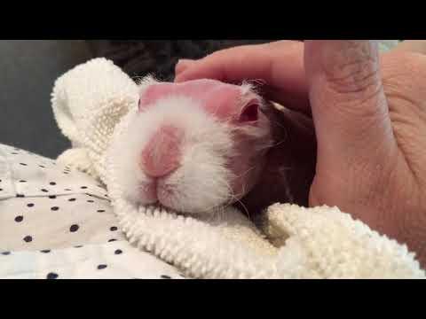Mr Bigglesworth Snuggle Time
