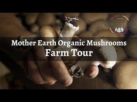 Mother Earth Organic Mushrooms Farm Tour