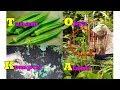 #TIS#LAYAK BISNIS !! Okra Lahan Sempit Pro Kompos Potong の動画、YouTube動画。