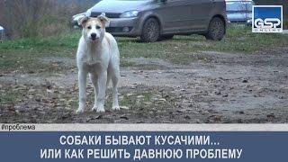 Собаки бывают кусачими… или как решить давнюю проблему   12 октября'16