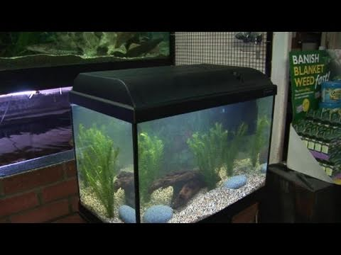How to position your fish tank youtube for Youtube fish tank