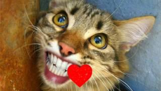 Кошки улыбаются