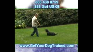 Learn To Become A Dog Trainer