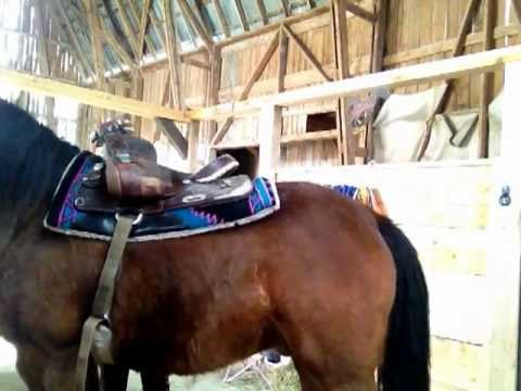 How to tie a horse cinch. (Western saddle)