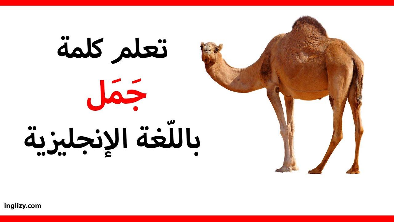 جمل باللغة الإنجليزية L سلسلة أسماء الحيوانات بالإنجليزية Youtube