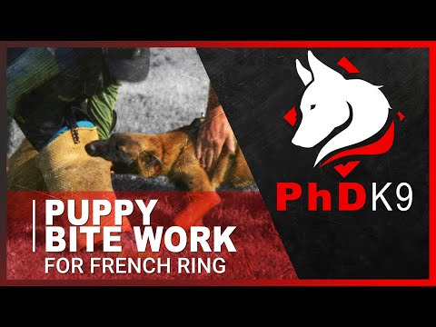 Puppy Bite Work For French Ring Protection Sport With Bethany Preud'homme From PhD K9.