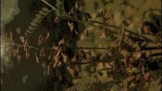 видео Сферофиза солонцовая