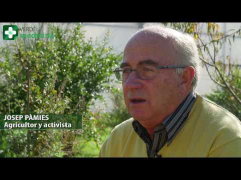 VERDE MEDICINA -05 REPORTAJE: JOSEP PÀMIES Y LA MARIHUANA
