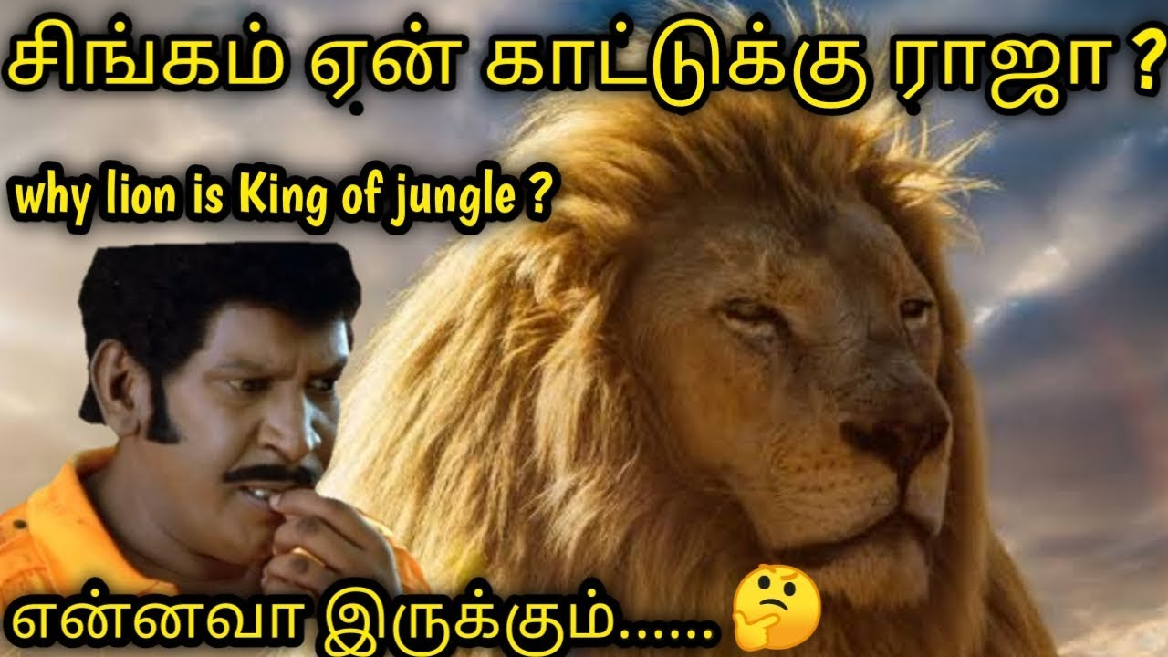 Download why the lion is king of the jungle in tamil