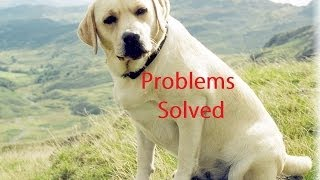 Labrador Health Problems Solved - Free Mini Course Solves Labrador Health Problems