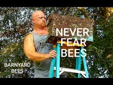 How To Conquer Your Fear Of Bees