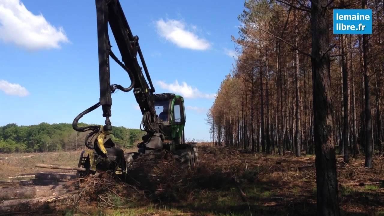 abattage des arbres dans la for t de berc apr s l 39 incendie youtube. Black Bedroom Furniture Sets. Home Design Ideas