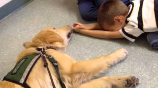 service dog in training with special needs children