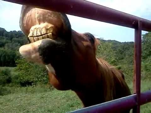show me your teeth buckshot (the horse)