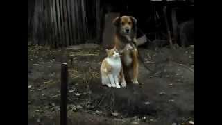 Лучшие друзья кот и собака