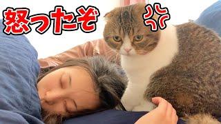 無限に2度寝するママVS怒った猫