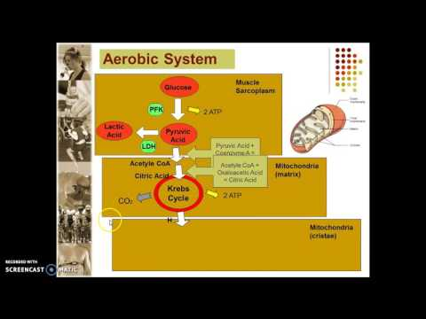 A2 PE AEROBIC ENERGY SYSTEM