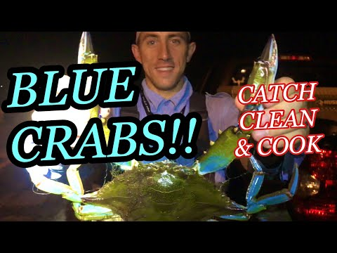 Giant blue crabs 🦀 (catch clean cook) netting crabs at night