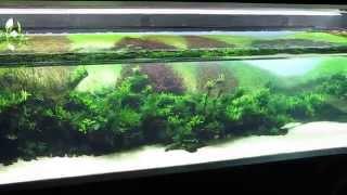 """Forests Underwater"", Takashi Amano"