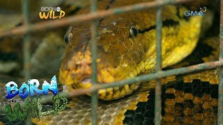 Born To Be Wild Do S And Don Ts When You Encounter A Snake