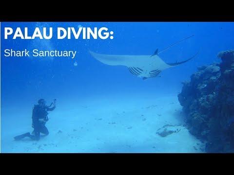 PALAU DIVING:  The Shark Sanctuary HD