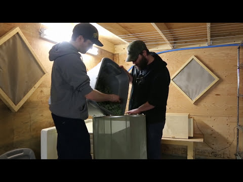 From Seeded Bud to Sift and Seed