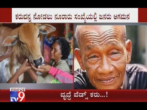 74-Yr-Old Woman Marries Cow Calf in Cambodia, Thinks It's Her Reincarnated Husband