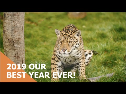2019 Highlights From The Big Cat Sanctuary!
