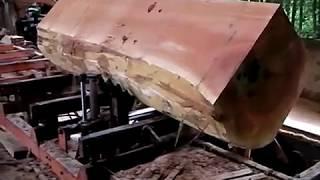 Wood-Mizer LT70 cutting Durian wood in Malaysia