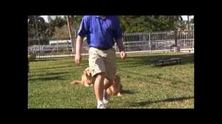 "Dog Training ""the Miami Dog Whisperer Way"""