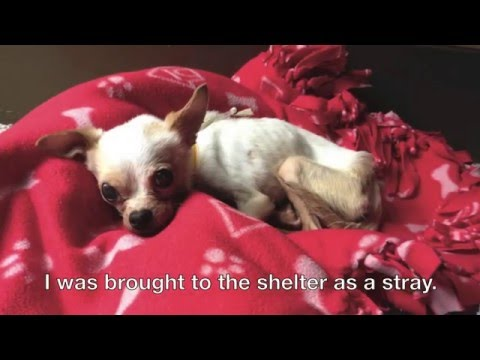 When Life Gives You Lemons: A small dog's recovery journey.