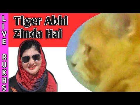 Tiger 🐯  zinda hai😁Tiger ke Saath dilchasp mulakat  Vlog