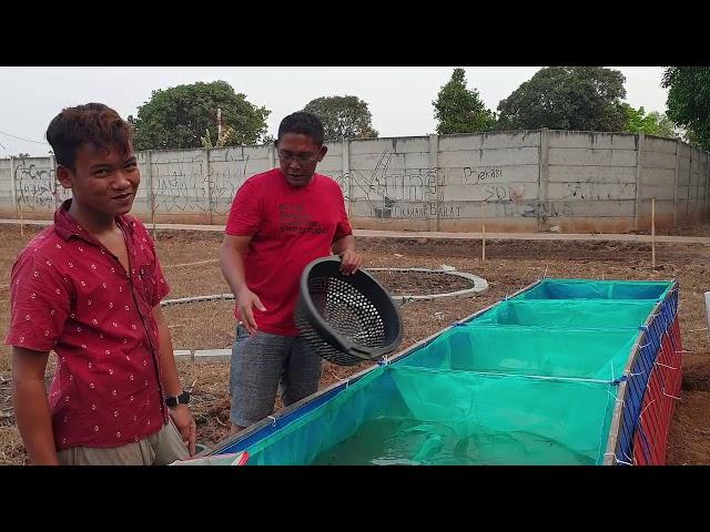 FULL VIDEO: Cara buat kolam sortir LELE