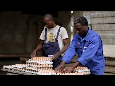 Employing a Scientific Approach to Poultry Farming in Togo