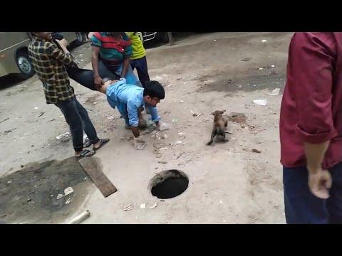 JT - Helping a Puppy