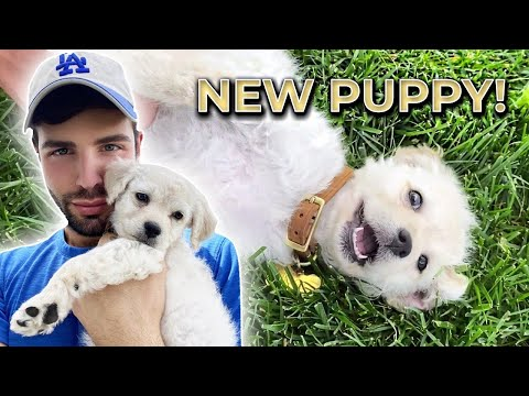 I ADOPTED A PUPPY!   *so cute*