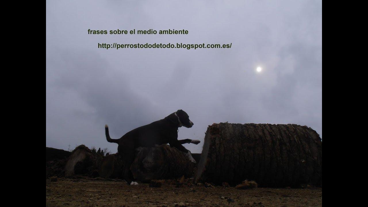 Frases Sobre El Medio Ambiente Coco Perro Guapo