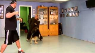 Basic Protection Mans Best Friend Dog Training