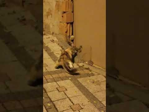 Cat Chasing Mouse on Street Backs off When Mouse Jumps In Front of Them - 1072161