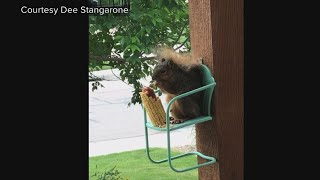 Squirrel Dining Out
