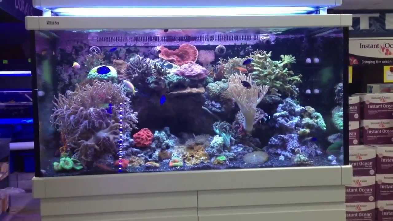 red sea max s 500 reef tank youtube. Black Bedroom Furniture Sets. Home Design Ideas