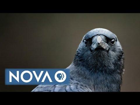 Bird Brain Preview