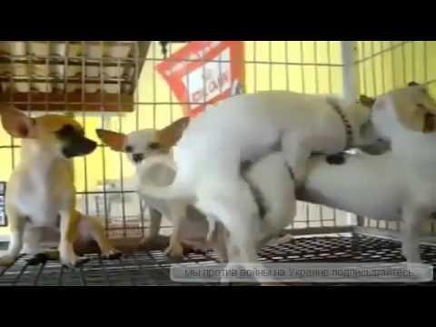 seks-hayvonlar-video-diko-oret-porno