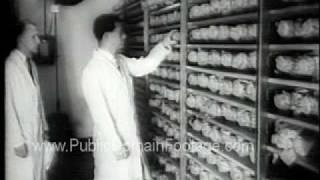 Jonas Salk Polio Vaccine Discovery Public Domain Newsreel PublicDomainFootage.com