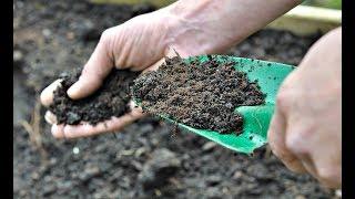Немедленно посадите это у себя на огороде в сентябре! Что посадить осенью в сентябре на огороде?