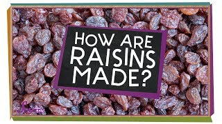 How Are Raisins Made?