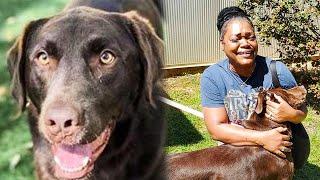 Через 2 года после пропажи, собака вернулась домой удивительным образом