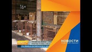 Волонтер собачьего приюта из Калининграда оценил, как ловят бездомных зверей в Красноярске