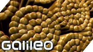 Top 5 Luxusprodukte aus Holz | Galileo ProSieben