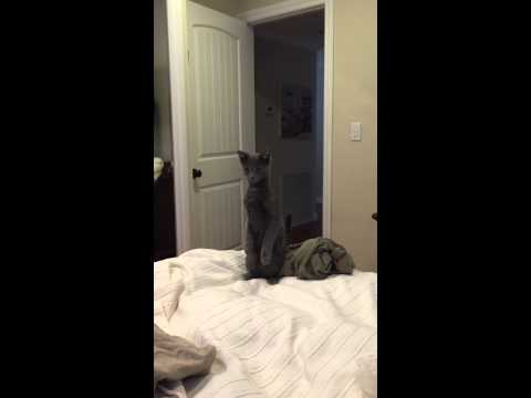 Standing curious cat..